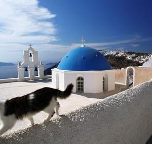 Katzen und Urlaub