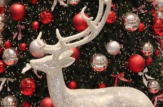 Weihnachtsbaum und Adventsdeko in Katzenhaushalten