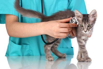 Katzen-Gesundheit