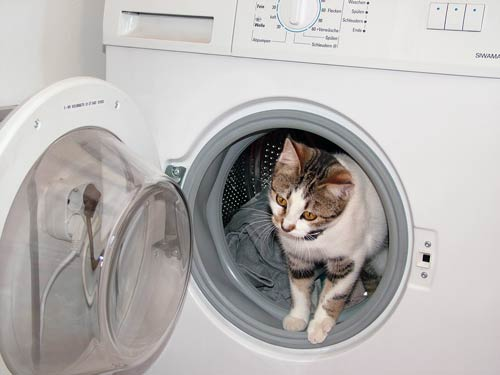 Gefahrenquellen für Katzen in der Wohnung