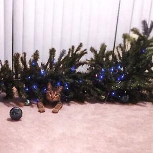 Katze wirft Tannenbaum um und schaut unschuldig