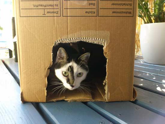 Einfaches Katzenhaus zum selber-bauen