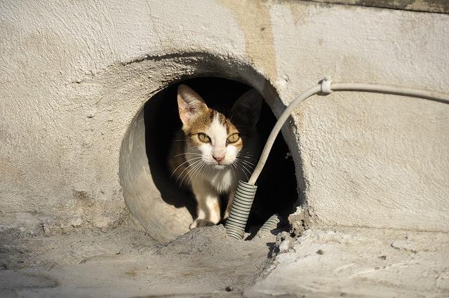 Leidende Katze
