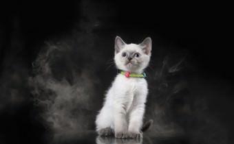 kleine Katze inmitten von Zigaretten-Rauch