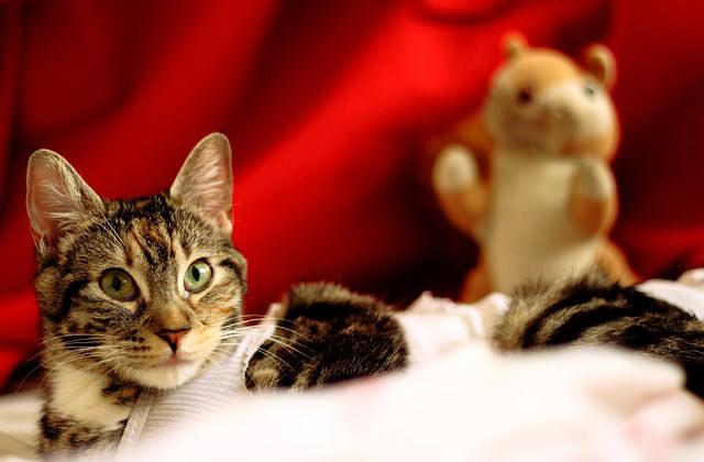 Das sind die Gefahrenquelle einer Katze an Weihnachten