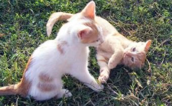 Katzen Frühlingsgefühle