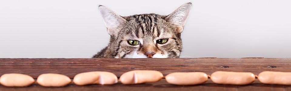 Katzen betteln abgewöhnen