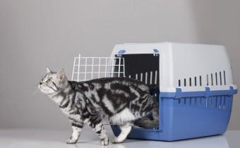 Die richtige Katzentransportbox