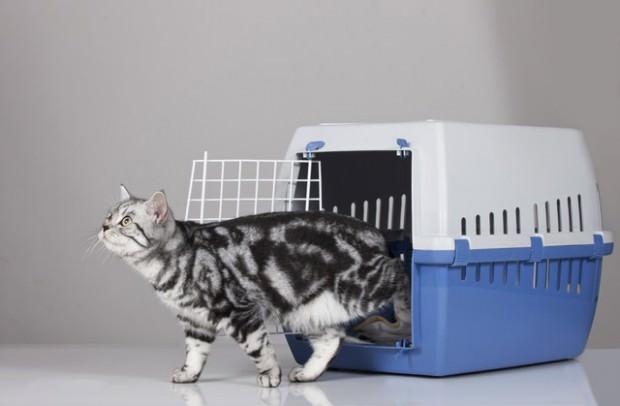 Transport von Katzen