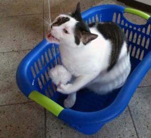 Eine Katzenangel ist schnell gebastelt