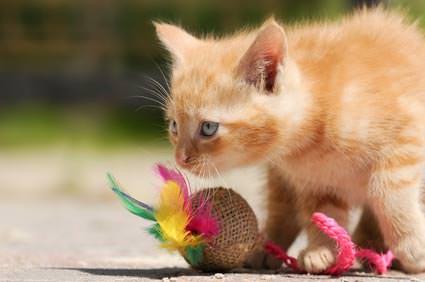 Katzen-Spiele mit Bällchen