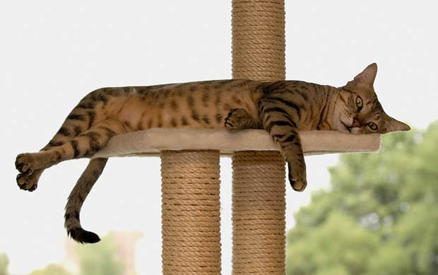 Katzenbaum mit glücklichem Stubentiger