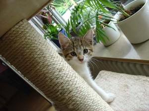 Katzenbaum mit Kitten