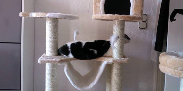 Katzenbedarf must have