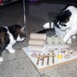 Katzenfummelbrett selber bauen - Ideen