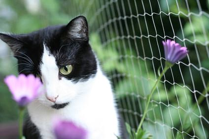 Katzennetz auf dem sicheren Balkon