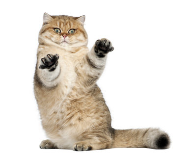 Katzenrekorde