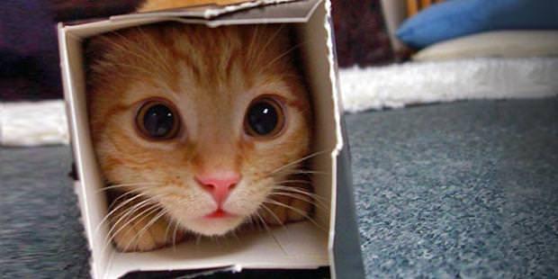 Katzenspielzeug selber basteln