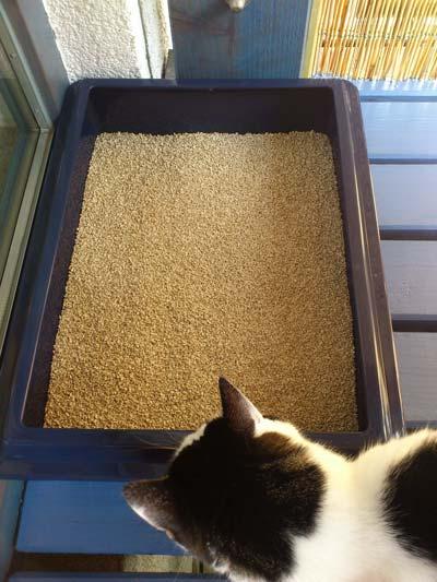 Ja das macht die Katze froh - Ein sauberes Katzenklo