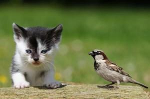 Freigänger, Kitten mit Vogel