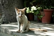 Traurige kranke Katze blickt dich an