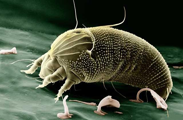 Milben und Parasiten