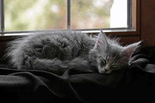Kitten schläft friedlich