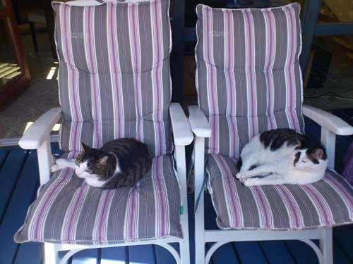 Katzen-Schlafplätze auf dem Balkon