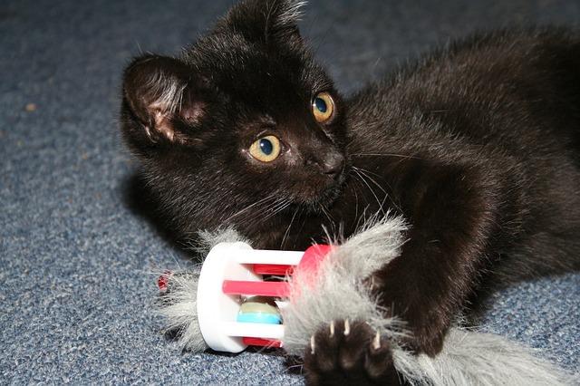 Spielende Katze hängt an einem Seil