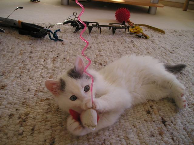 spielendes kitten