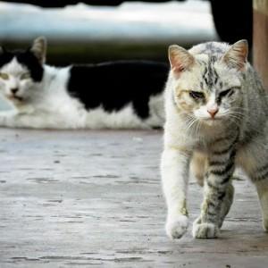 Streunende Katze in Not