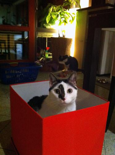 Katze spielt Verstecken im Karton
