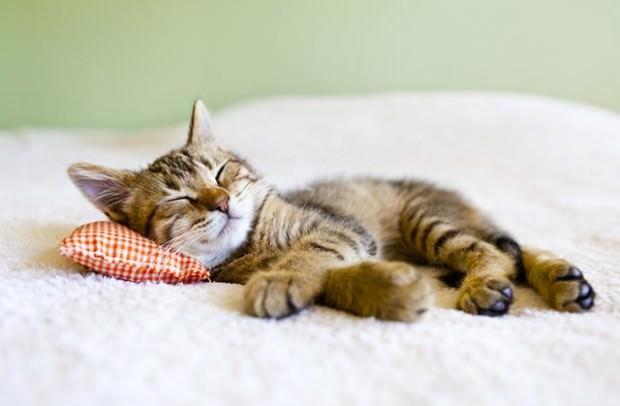 Kleine Katze schläft in der Wohnung