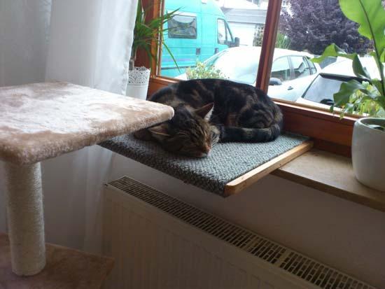 Wohnung Katzengerecht gestalten